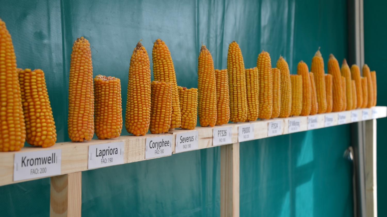 prekybos kukurūzų ateities strategijomis